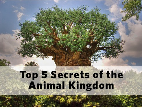 Secrets of Animal Kingdom
