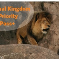 Disney Animal Kingdom Top Priority Fast Pass+